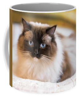Seal Point Bicolor Ragdoll Cat Coffee Mug