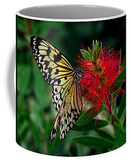 Coffee Mug featuring the photograph Searching For Nectar by Nick Bywater