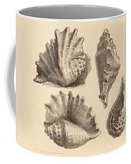 Seba's Spider Conch Coffee Mug