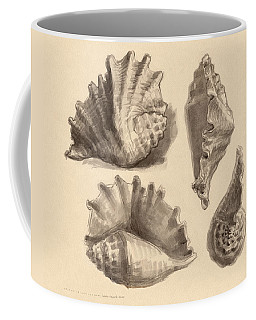 Coffee Mug featuring the painting Seba's Spider Conch by Judith Kunzle