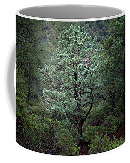 Sedona Tree #1 Coffee Mug