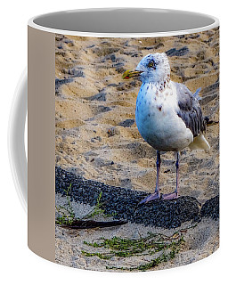 See The Gull Coffee Mug