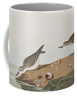 Semipalmated Sandpiper Coffee Mug