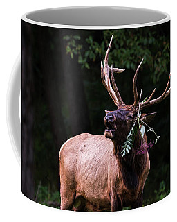Coffee Mug featuring the photograph Serenading by Andrea Silies