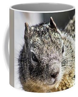 Serious Squirrel Coffee Mug