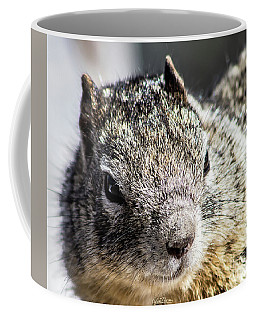 Serious Squirrel Coffee Mug