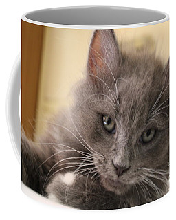 Seriously Bro Just Stop With The Photos  Coffee Mug by Scott D Van Osdol