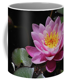 Coffee Mug featuring the photograph Shades Of Pink by Amee Cave