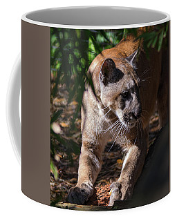 Sharpening Claws Coffee Mug by John Black