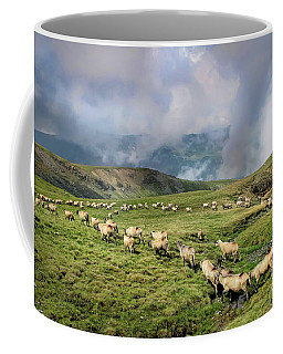 Sheep In Carphatian Mountains Coffee Mug