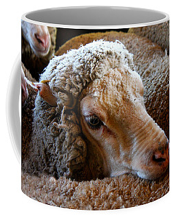 Sheep To Be Sheared Coffee Mug