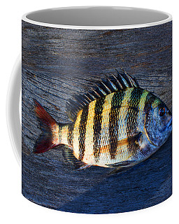 Coffee Mug featuring the photograph Sheepshead Fish by Laura Fasulo