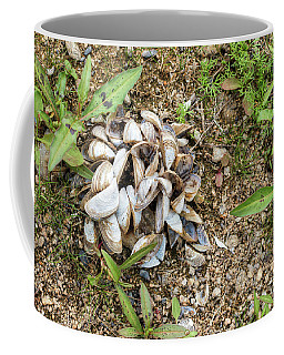 Coffee Mug featuring the photograph Shells Of Freshwater Mussels by Michal Boubin