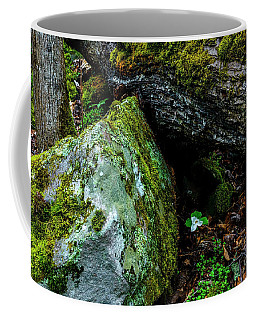 Coffee Mug featuring the photograph Sheltered By The Rock by Thomas R Fletcher