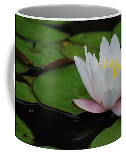 Coffee Mug featuring the photograph Shining Bright by Amee Cave