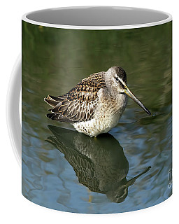 Coffee Mug featuring the photograph Short-billed Dowitcher by Sharon Talson