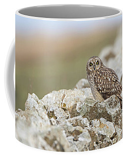 Short-eared Owl In Cotswolds Coffee Mug