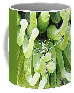 Shrimp And The Anemone Coffee Mug