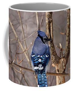 Shy Blue Jay  Coffee Mug by David Porteus
