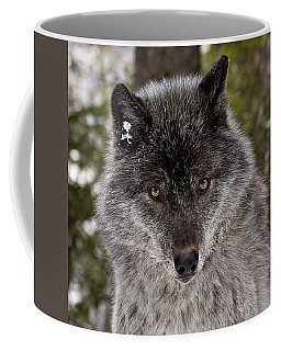 Shy Coffee Mug