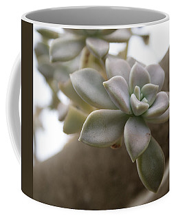 Coffee Mug featuring the photograph Simple Beauty by Jean Haynes