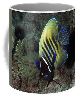 Six Banded Angelfish, Great Barrier Reef Coffee Mug