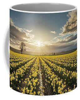 Coffee Mug featuring the photograph Skagit Daffodils Bright Sunstar Dusk by Mike Reid
