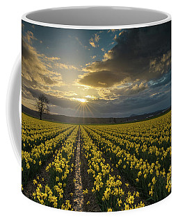 Coffee Mug featuring the photograph Skagit Daffodils Golden Sunstar Evening by Mike Reid