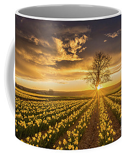 Coffee Mug featuring the photograph Skagit Valley Daffodils Sunset by Mike Reid