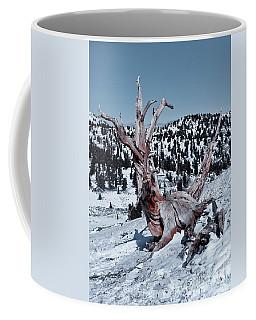 Coffee Mug featuring the photograph Skating Pine by Mae Wertz