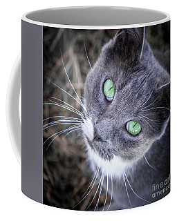 Coffee Mug featuring the photograph Skitty Green Eyes by Cheryl McClure