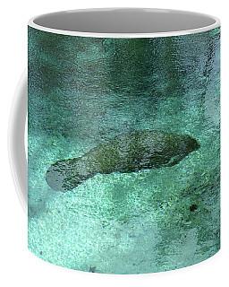 Sleeping In The Blue Coffee Mug