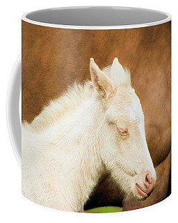 Sleepy Baby Horse Coffee Mug