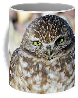 Sleepy Burrowing Owl Coffee Mug