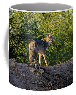 Sleepy Coyote Coffee Mug