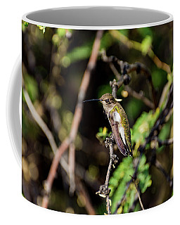 Sleepy Hummingbird Coffee Mug