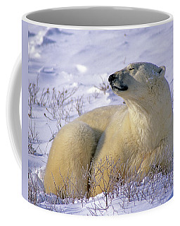 Sleepy Polar Bear Coffee Mug