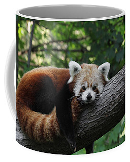 Sleepy Red Panda Coffee Mug