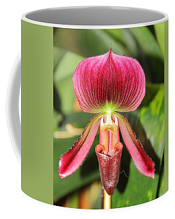 Slipper Orchid 2 Coffee Mug