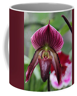 Slipper Orchid Coffee Mug