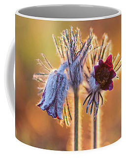 Small Pasque Flower, Pulsatilla Pratensis Nigricans Coffee Mug
