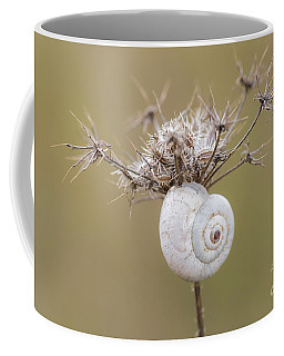 Small Snail Shell Hanging From Plant Coffee Mug