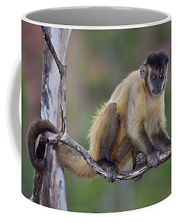 Coffee Mug featuring the photograph Smarty Pants by Tony Beck