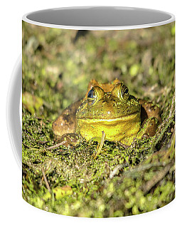 Coffee Mug featuring the photograph Smiling Frog by Cheryl Baxter