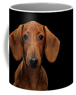 Smooth-haired Dachshund Coffee Mug