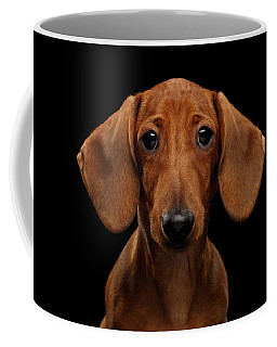Smooth-haired Dachshund Coffee Mug