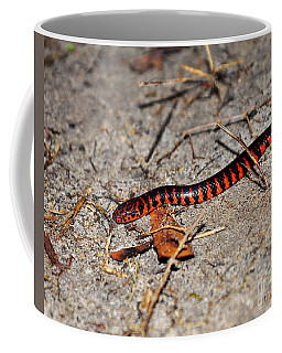 Coffee Mug featuring the photograph Snazzy Snake by Al Powell Photography USA