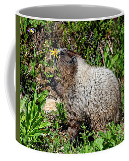 Marmot Coffee Mugs