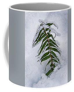 Coffee Mug featuring the photograph Snow Fern - 365-288 by Inge Riis McDonald