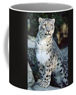 Snow Leopard Uncia Uncia Portrait Coffee Mug